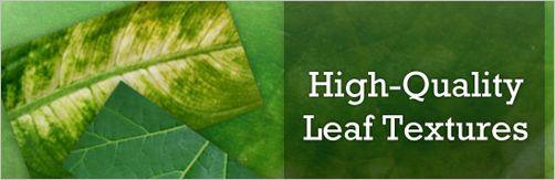 Leaf-Textures
