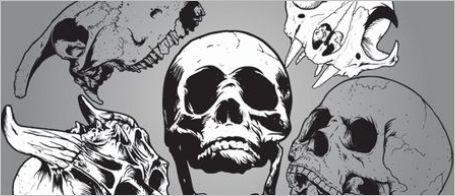 free-skull-vector02