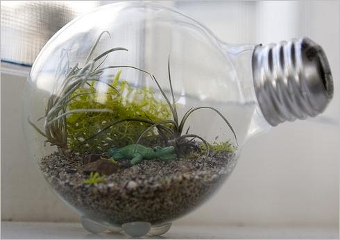 bulb01