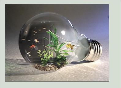 bulb05